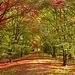 Alice Holt Forest Arboretum, Surrey