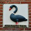 Leeuwarden 2018 – Black Swan