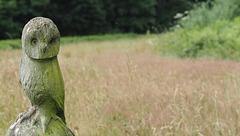 A Green Wood Owl