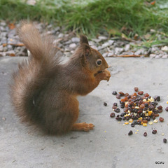 Red approves this message: Tesco's Everyday Value Mixed Dried Fruit are delicious!