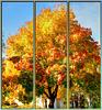 Wallpaper Herbst. Autumn. Automne. Autunno. ©UdoSm