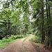 Sommergrün im Wald