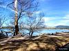 View across Lake Rotorua.