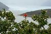 Argentina, The Flower of Chilean Firebush with the Glacier of Perito Moreno at the Background