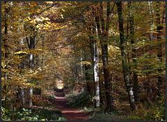 parfum d' automne ......