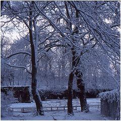 1-rocco-Maisons Laffitte sous la neige- (4)