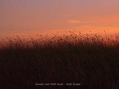 Grass at Pett Level at sunset