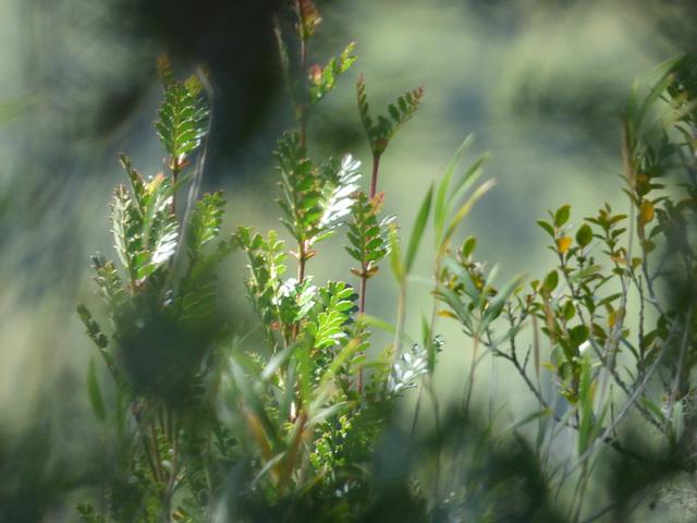 Plantas del sur