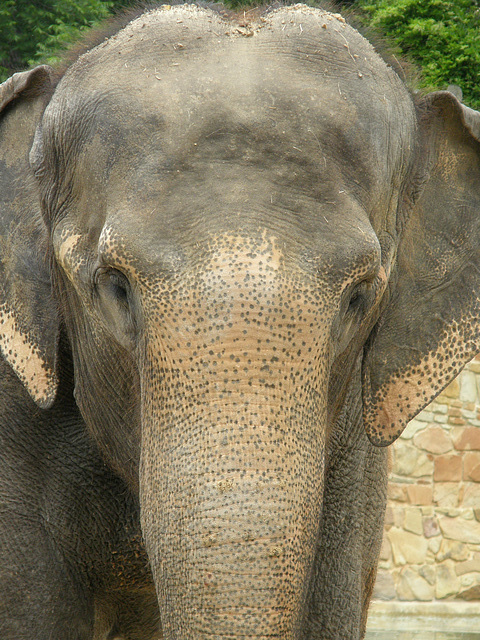 Elephant at Fort Worth Zoo