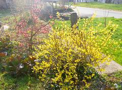 grün rot gelb - die Farben des Frühlings