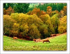 El campo en otoño