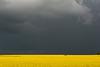 Springtime Thunderstorm