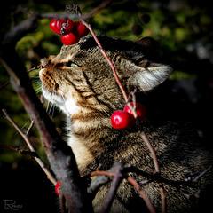 Boucles d'oreilles.. pour chat