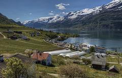 The fruit gardens of Hardanger.