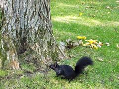 Le culte d'un écureuil