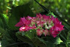 penombra fiorita