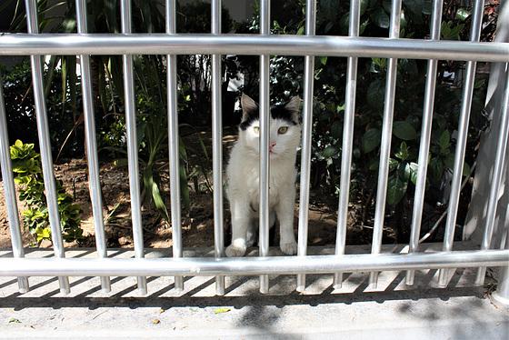 Lock up cat    HFF!
