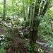 Plätschern im Wald
