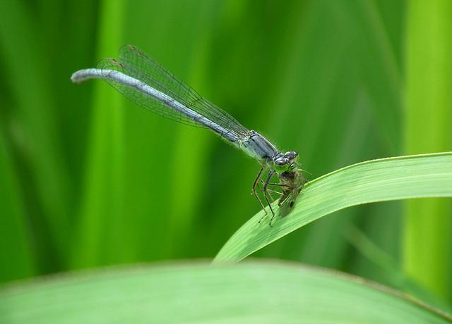 la fin d'une mouche / death of a fly