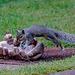 IMG 7731 Wildlife dpp