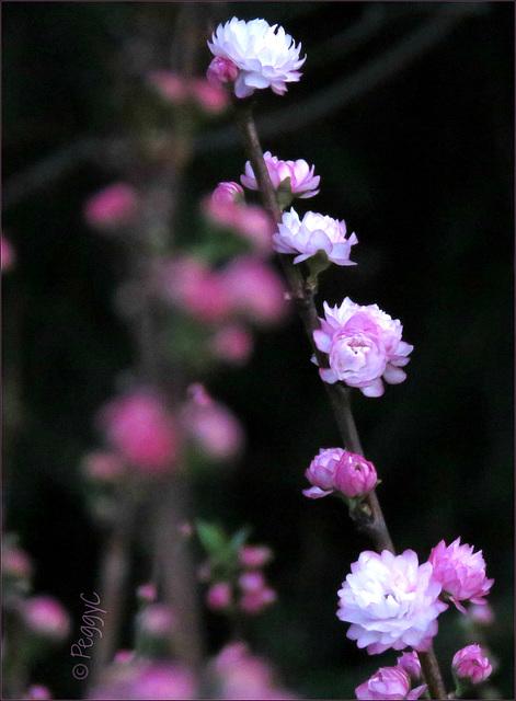 Flowering ..