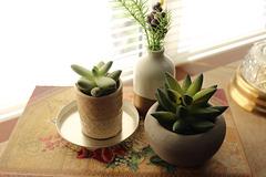 Succulents !!!!