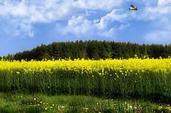 Vol au dessus d'un champs ......