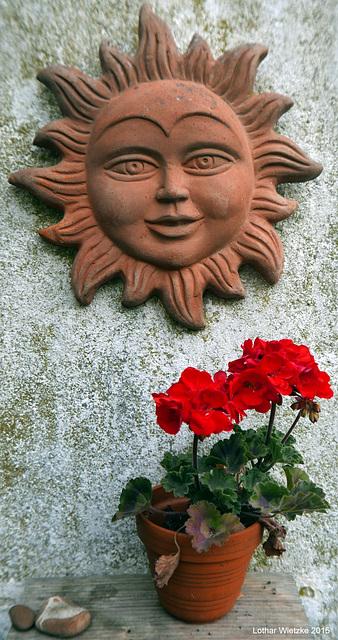 Pelargonien (Pelargonium) Geranien und die Sonne lacht dazu...