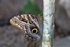 Eifalia Schmetterlingsgarten DSC00529