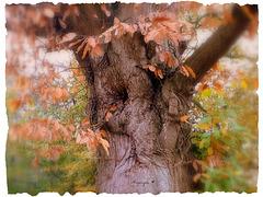 L'automne est proche !