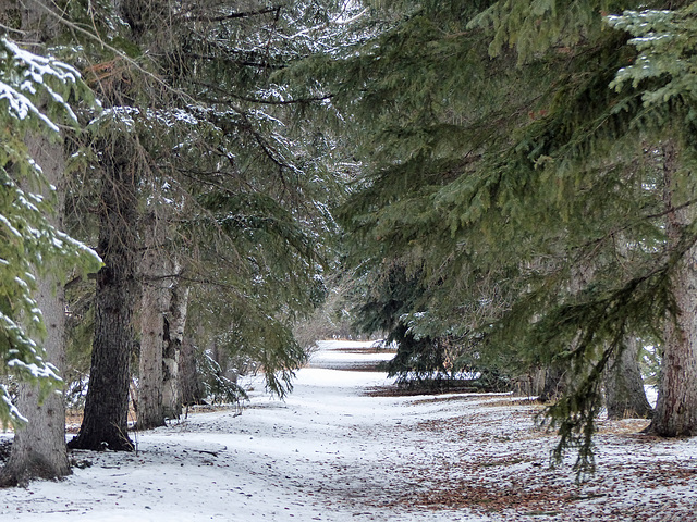 Avenue of trees at Baker Park