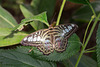 Eifalia Schmetterlingsgarten DSC00519