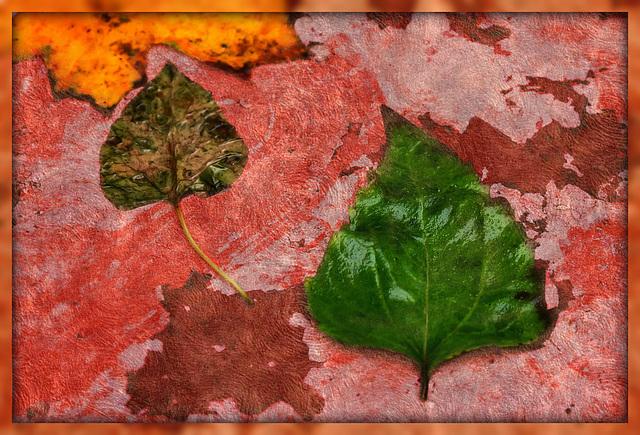 kleine Herbstwelt 9
