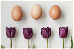 purple tulips raw eggs