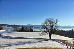 HFF - Allgäuer Landschaft