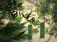 Riviera delle palme ...
