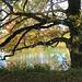 Chêne, Parc de la Tête d'Or, Lyon, Rhône (France)