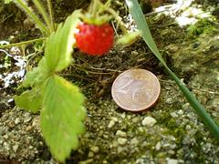 Tiny strawberry.