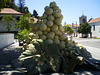 Bunch of grapes fountain.