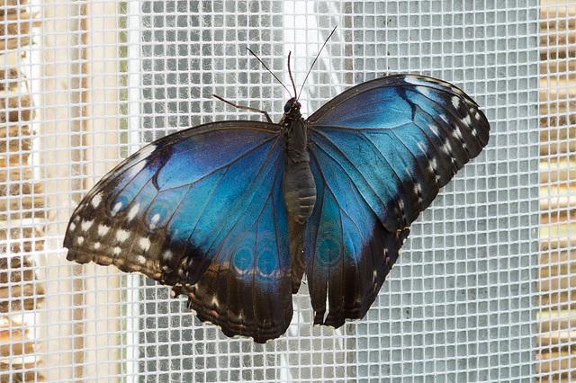 Eifalia Schmetterlingsgarten DSC00512