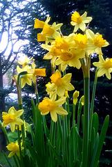 ..primi fiori primaverili...