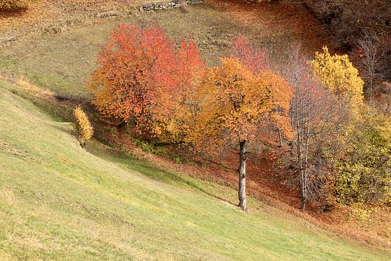 torpeur de l'automne