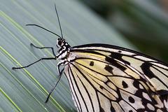 Eifalia Schmetterlingsgarten DSC00498