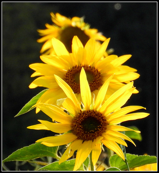 Yellow Row