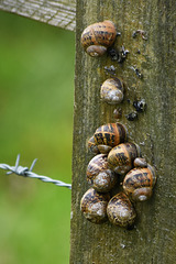 A fence with snails!