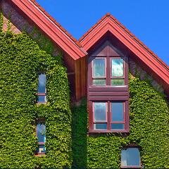 le case di Bryggen - Bergen -  Norge (455)