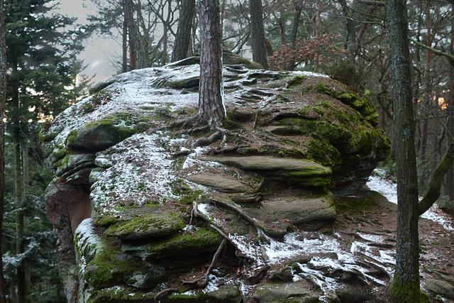 Fin de journée dans les Vosges du nord