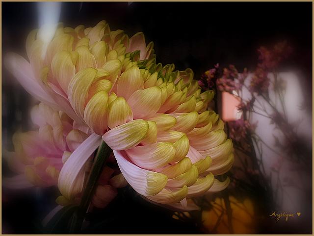 Chrysanthème ..............Pour Lucette ♥