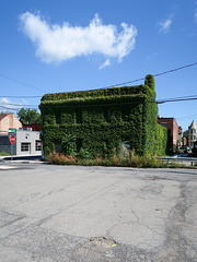 Vinebldg of downtown Schenectady.