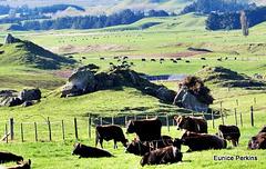 Across Farmland.